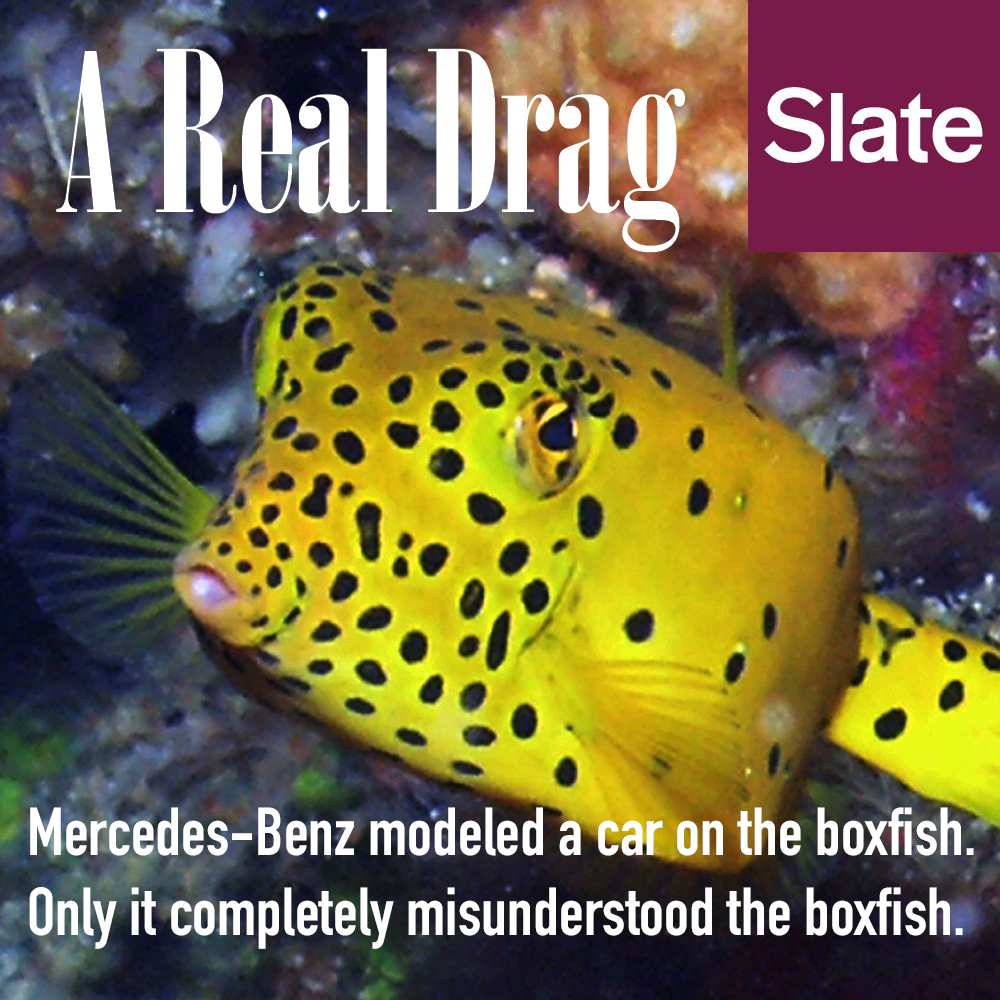 Boxfish article for Slate magazine